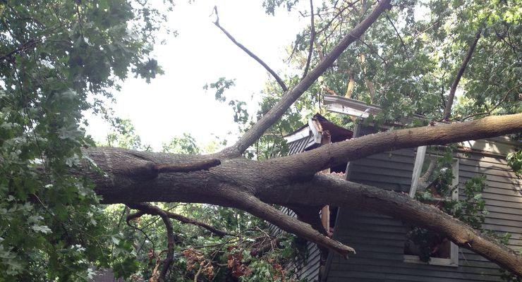 спил аварийного дерева