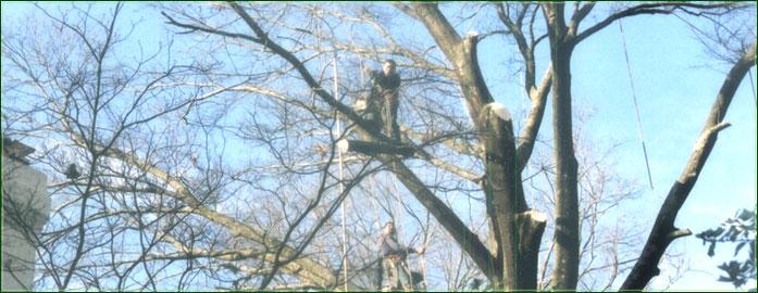 Спил деревьев частями