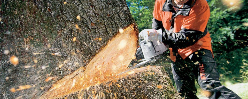Спил деревьев с земли