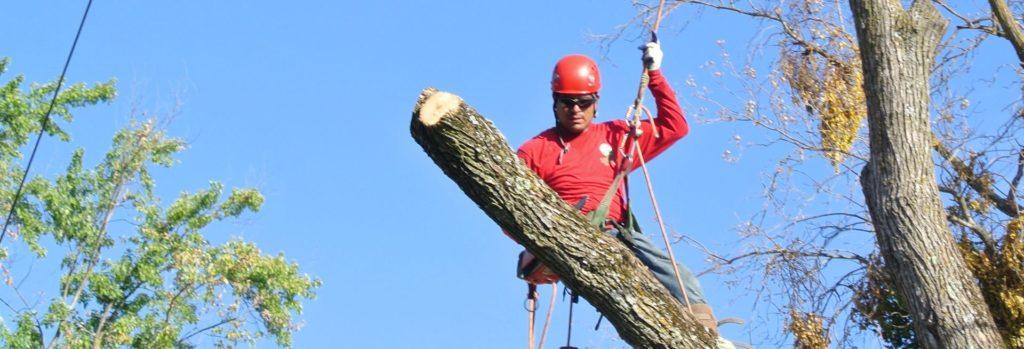 спилить аварийное дерево