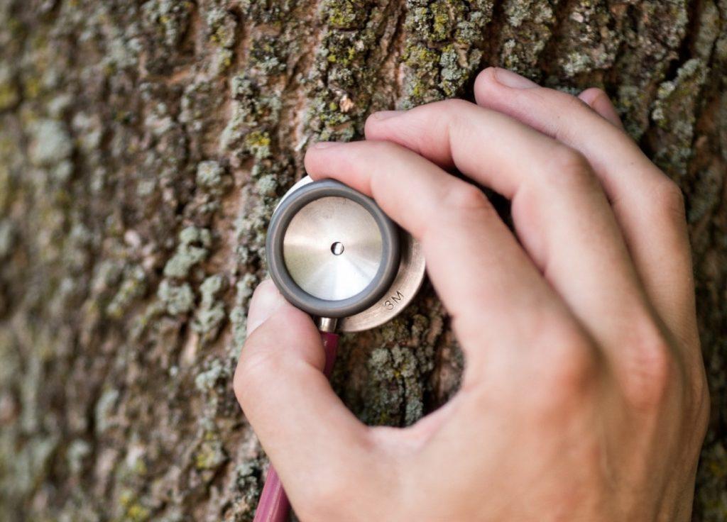 Лечение деревьев