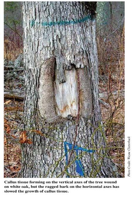 раны деревьев