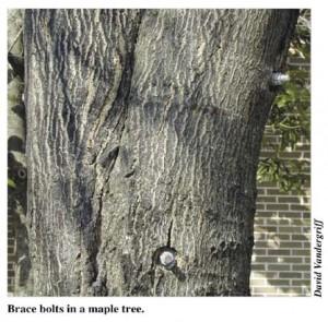 распорные стержни для дерева