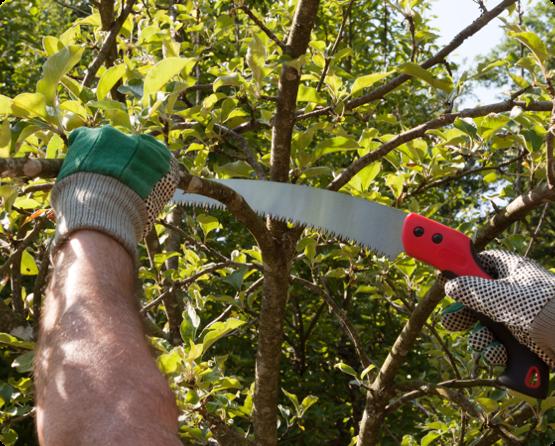 обрезка молодых деревьев