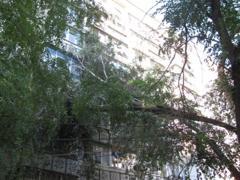Срубить дерево во дворе