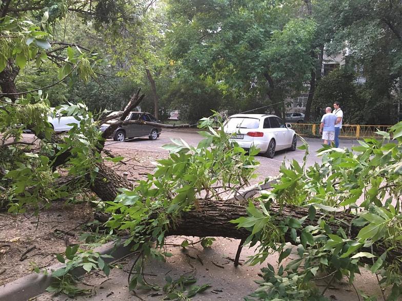 упало дерево во дворе