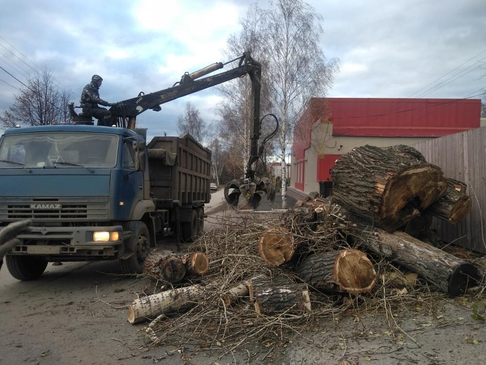 как не убирать спиленные электриками деревья