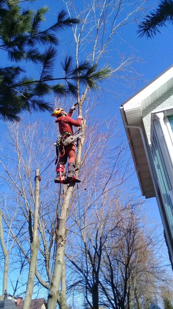 Спилить дерево на своем участке