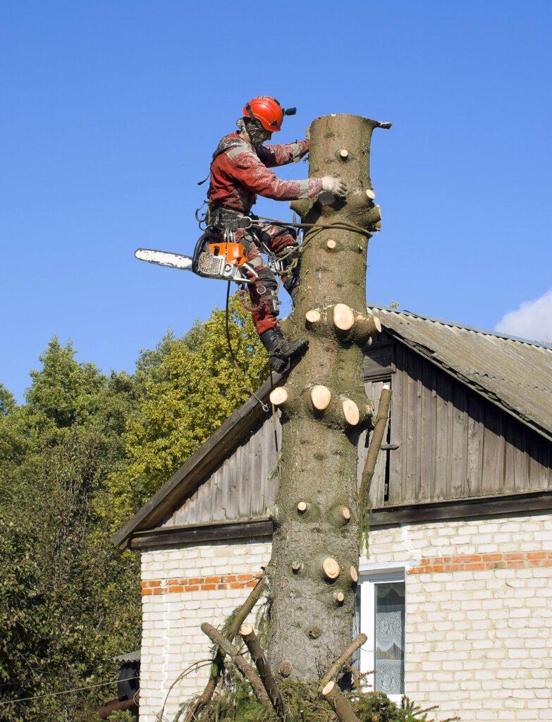 срубить дерево на своем участке