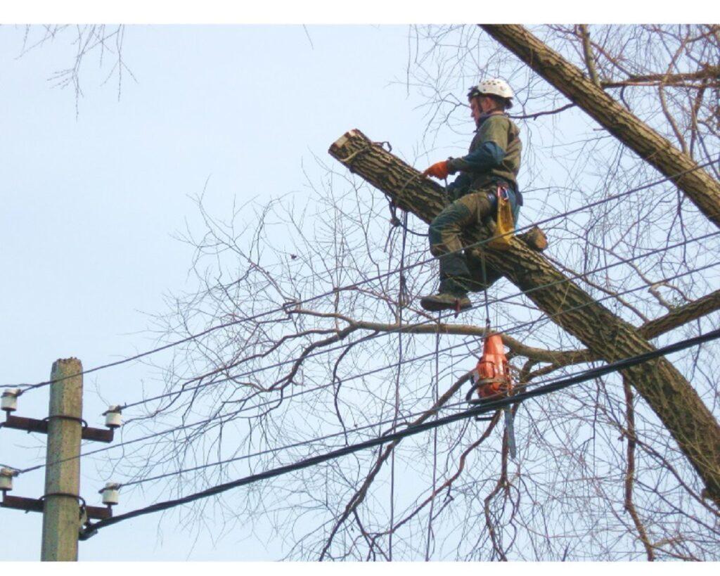 спил деревьев рядом с проводами