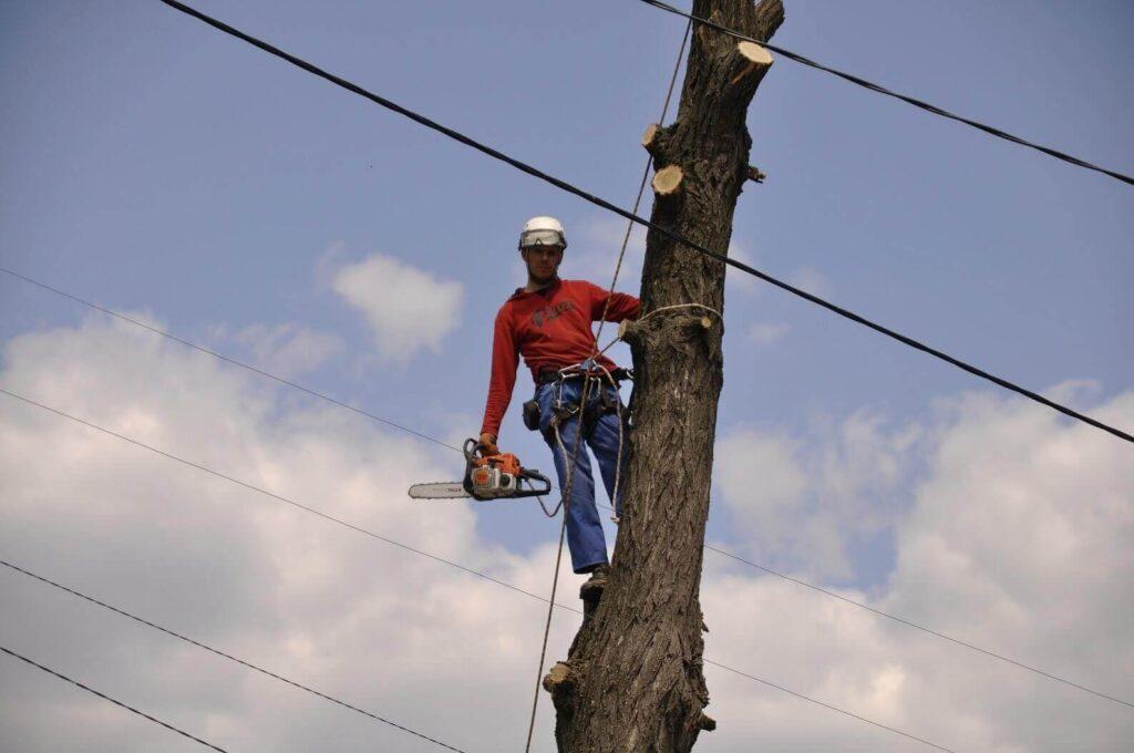 спилить дерево рядом с проводами